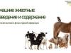 ВВ-Домашние-животные_0000001
