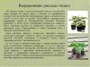 Рассада-овощных-культур-уход-и-стимуляторы-роста_0000002-min