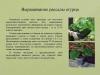 Рассада-овощных-культур-уход-и-стимуляторы-роста_0000003-min
