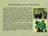 Рассада-овощных-культур-уход-и-стимуляторы-роста_0000005-min