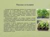 Рассада-овощных-культур-уход-и-стимуляторы-роста_0000007-min