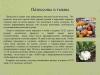 Рассада-овощных-культур-уход-и-стимуляторы-роста_0000008-min