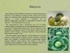 Рассада-овощных-культур-уход-и-стимуляторы-роста_0000009-min