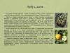 Рассада-овощных-культур-уход-и-стимуляторы-роста_0000012-min