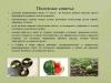 Рассада-овощных-культур-уход-и-стимуляторы-роста_0000014-min
